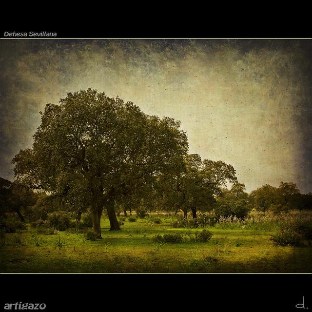 Texturized Sevillian pastureland (II)