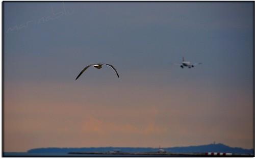 """costa nikon nuvole mare aeroporto cielo aereo gabbiano nizza collina promenadedesanglais d90 costaazzurra atterraggio aeroplani versosera """"flickraward"""" ehiaspettamiperfavore"""