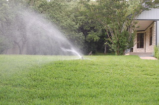 Conserving water in lawn