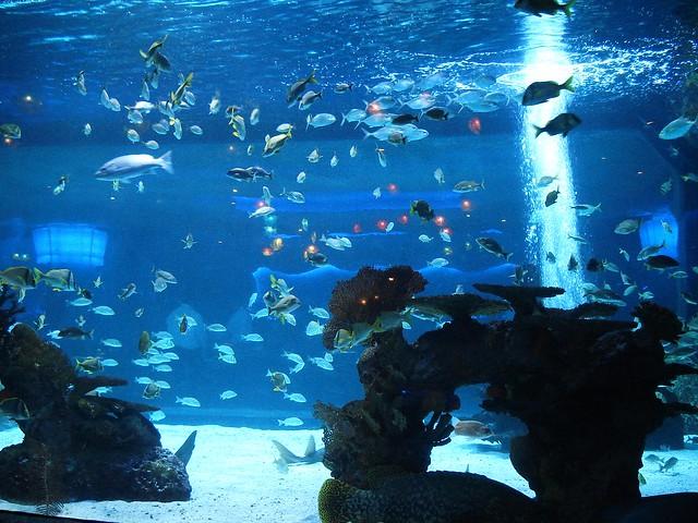 Houston Aquarium Flickr Photo Sharing