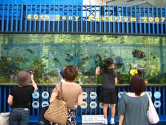 Tokyo - Sony Building Aquarium