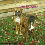 Cash and Cooper