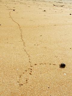 Bild av Playa de El Puntal. beach sand camino path snail playa arena trail bicho caracol mollusc mollusk huella molusco gasterópodo