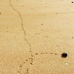 Playa de El Puntal