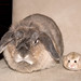 """*fume* """"i don't like having a hamster looking cuter beside me..."""" by jade_c"""