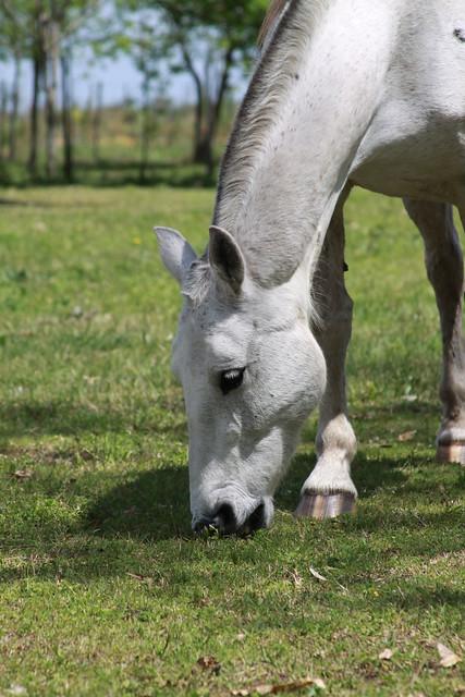 Header of caballo