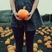 pumpkin heads by Amy L Silverman