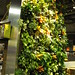 Living Wall - Longo's MLSQ