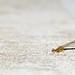 Dragon(?)fly by Daniel Ashton