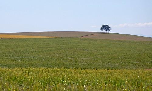 county blue sky cloud west tree green field grass oregon landscape nikon alone pacific northwest country north marion minimal solo single d40 edmundgarman