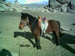 mare(0.0), stallion(0.0), mustang horse(0.0), animal(1.0), mule(1.0), halter(1.0), pack animal(1.0), horse(1.0),