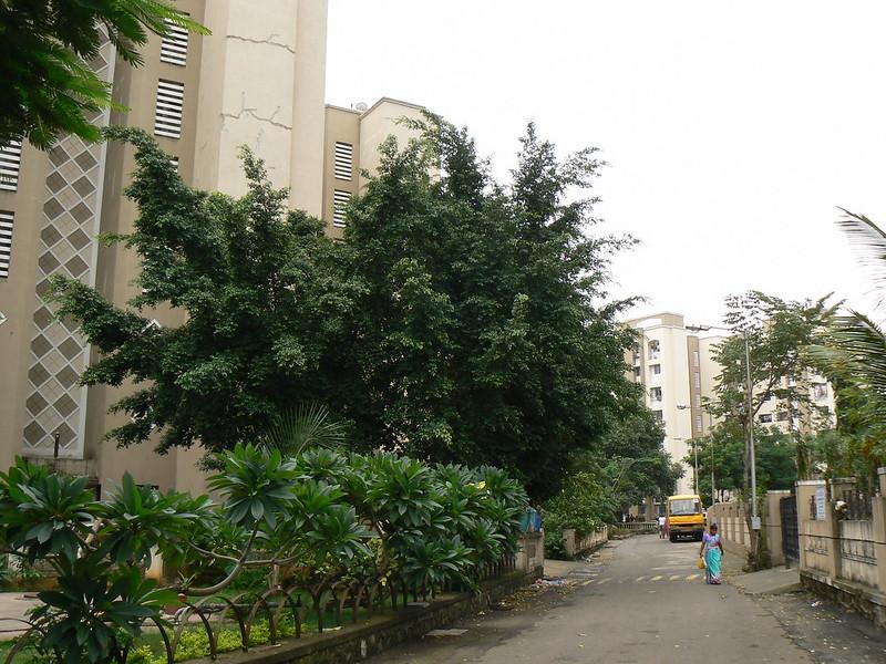 Nandarukha (Marathi: नांदरूख)