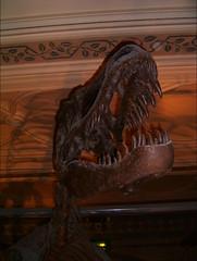 carving, art, velociraptor, tyrannosaurus, dinosaur, statue,