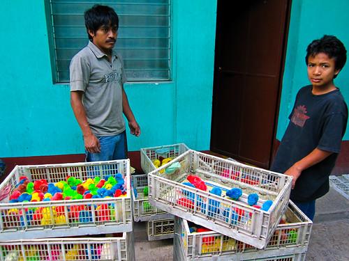 Jalapa 12 - Selling coloured chicks