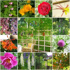 Gardening and flowers