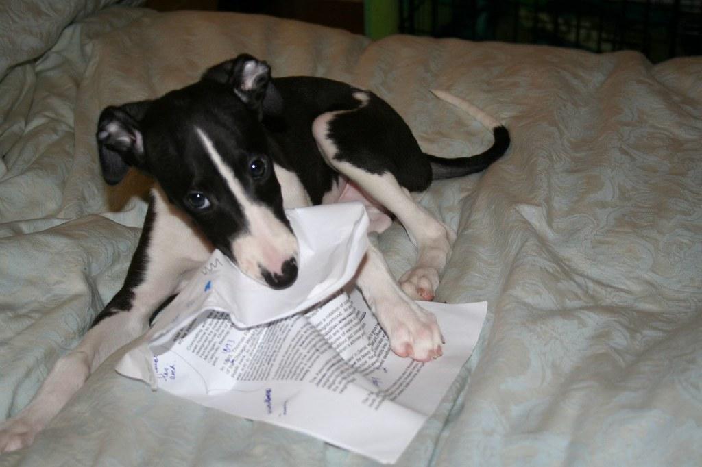dog ate homework