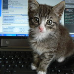 Midge cat and computer