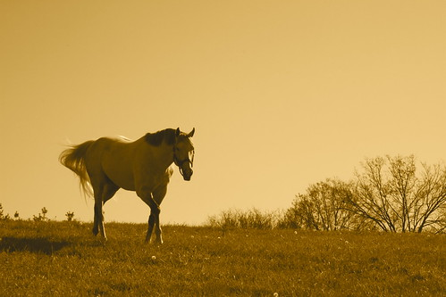 Unbridled's Song, Sepia