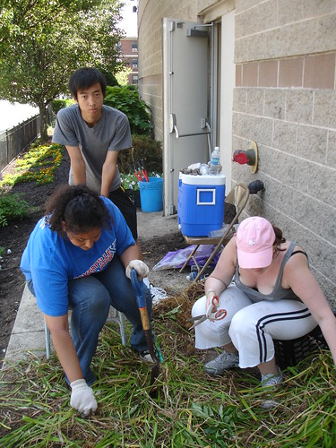 Community Garden Pictures 198