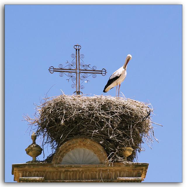Holy Stork