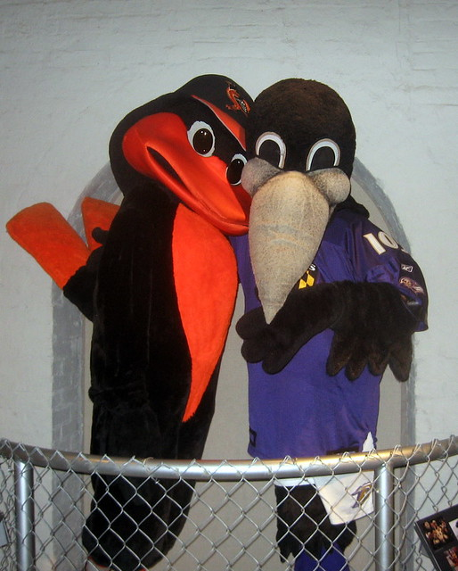 Oriole bird and one of the ravens mascots explore jeffq s