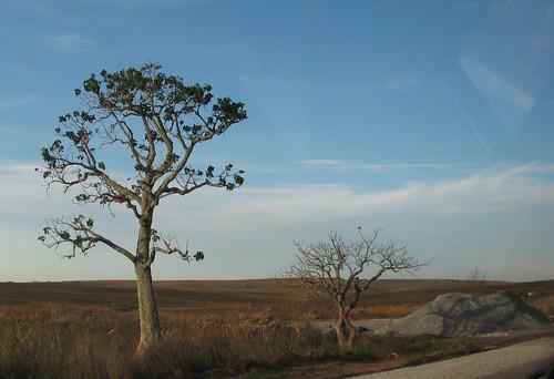 2 árvores