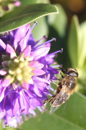 Bee-cause it's still sunny even in October! by Stocker Images