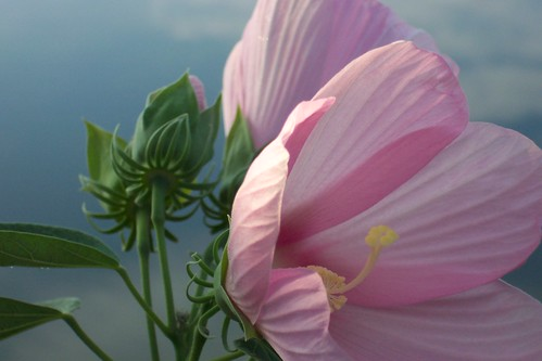 morning flowers blue wild sky fish flower color nature water contrast sunrise landscape outdoors dawn early fishing pennsylvania country pa perry