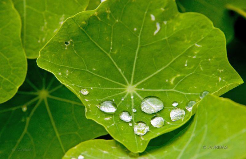 Jard n bot nico de soller un mundo de luz for Jardin botanico soller