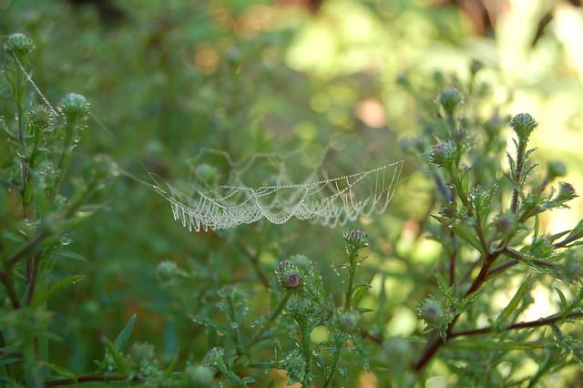Spider home