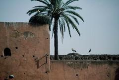 Marrakech (Morocco)
