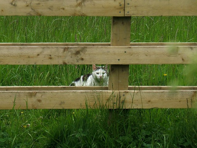 North Tyneside Cat And Dog Control