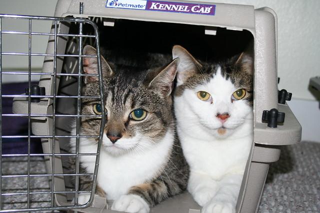 Are Cats Nervous Pets