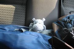 Hippo Ready To Go