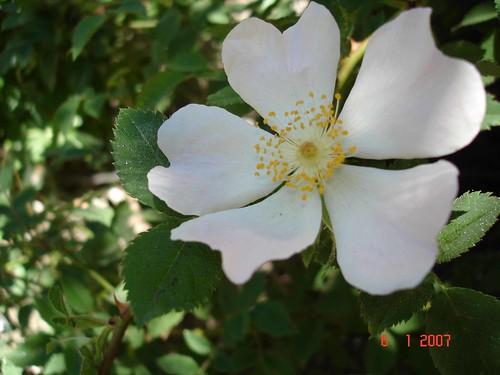 Autor: Lalis 2007