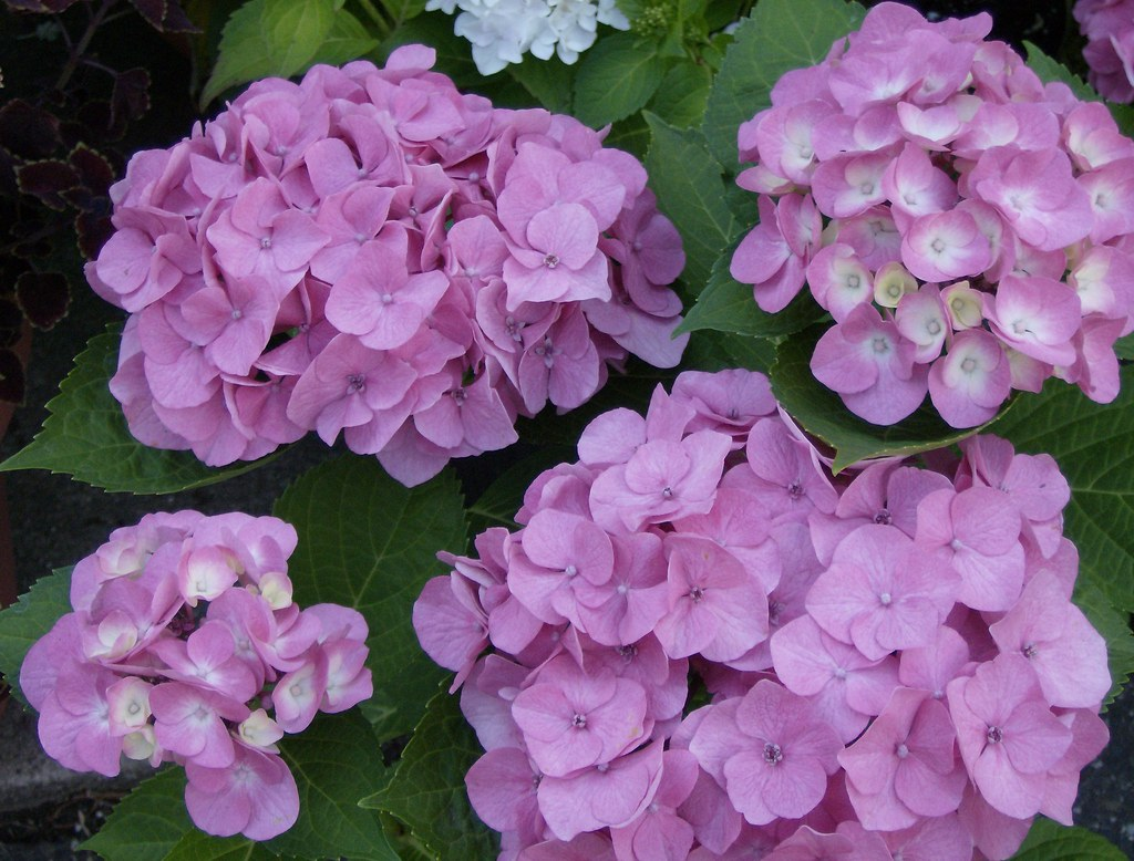 Luxury White Flower Farm Litchfield Ct Ideas Wedding And Flowers