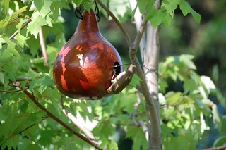 gourd birdhouses for Purple Martins and more