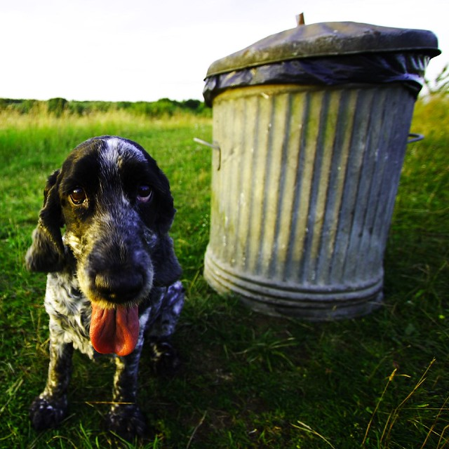Molly Dog In High Contrast By The Poo Bin
