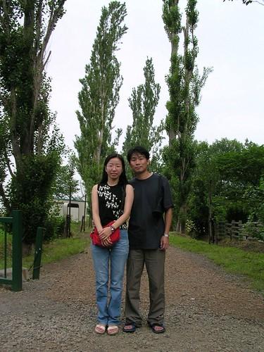 颱風摧殘後的白楊木林