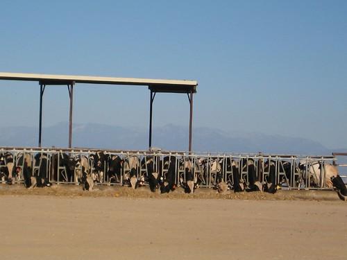 california trip tour valley views farms sanjoaquin excursion centralvalley sightsee seqouianatlpk