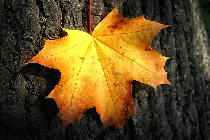 Herbstfarben 2010