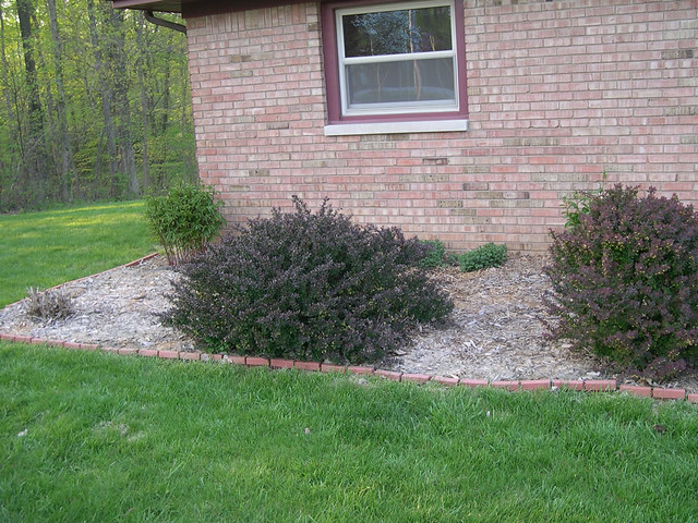 Red Bushes In Front Of House Flickr Photo Sharing