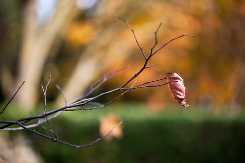 autumn brown tree nature public leaf europe branch sweden bokeh sverige scandinavia malmohus zweden vellinge canoneos5dmarkii ef100mmf28lmacroisusm vellingeblommor