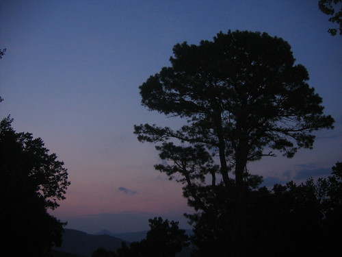 mountain tree before sunrise