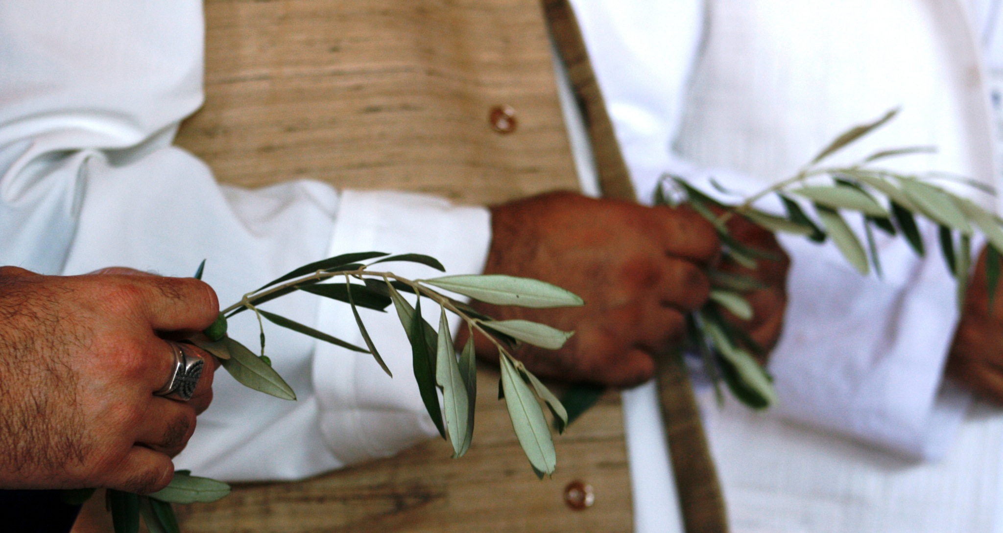 Olive branches held for peace