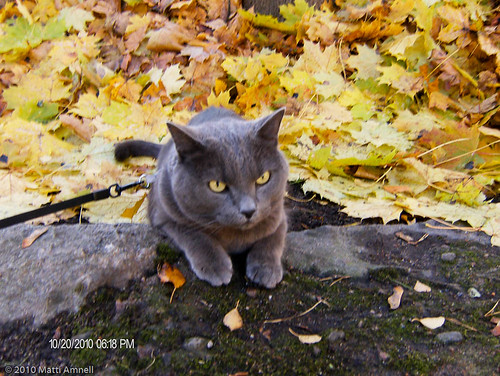 A Cat in Autumn by Brin d'Acier