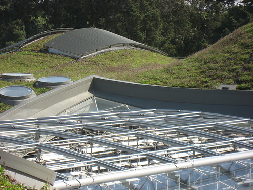 Green Roof and Skylight at the Cal Academy