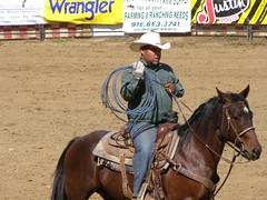 animal sports, rodeo, equestrianism, western riding, mare, event, equestrian sport, rein, sports, western pleasure, charreada, reining, barrel racing,