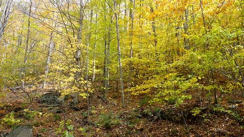 autumn colors catskills