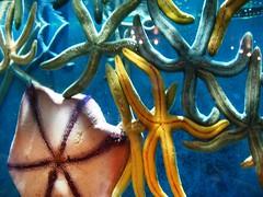 octopus(0.0), invertebrate(1.0), marine invertebrates(1.0),